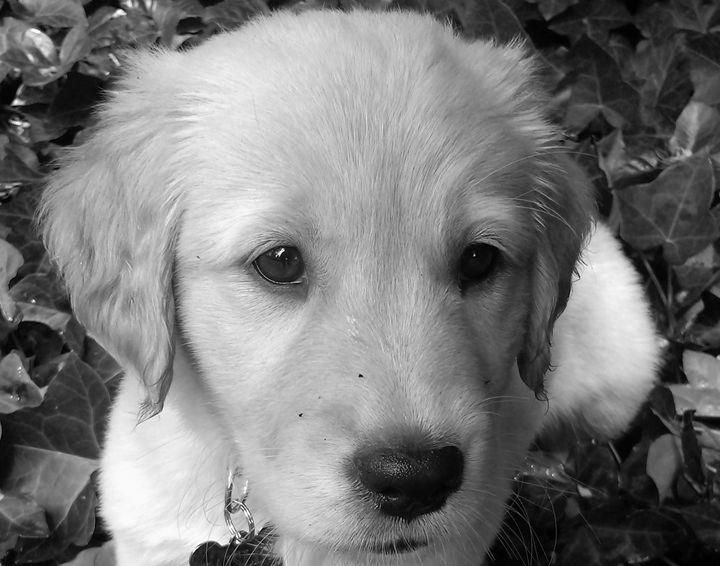 """Puppy Play 2"" - C. Fay Fine Art"