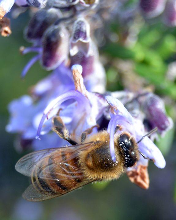 """Bee at Work"" - C. Fay Fine Art"