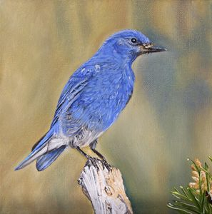 Mountain Bluebird - Adrian Pictures, paintings etc