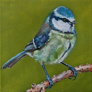 Blue Tit - Adrian Pictures, paintings etc