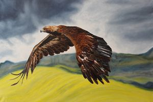 Golden Eagle in Flight - Adrian Pictures, paintings etc
