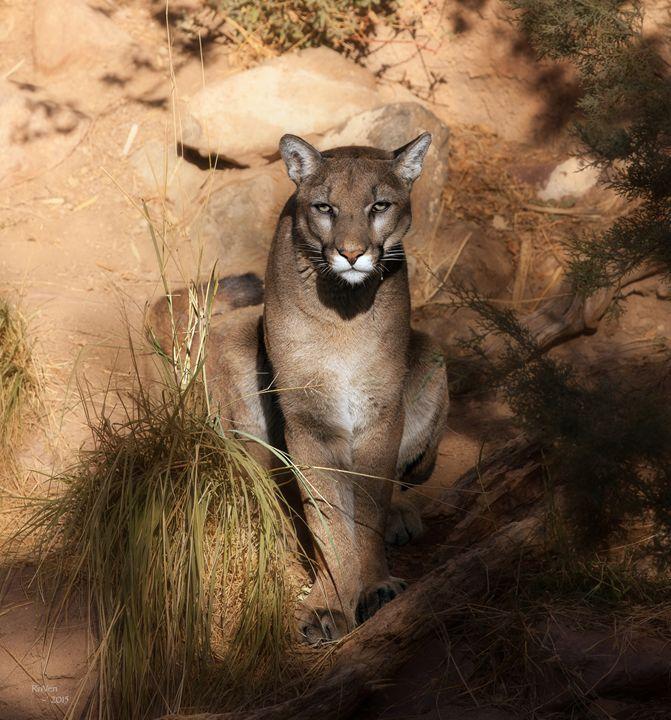 Cougar (mountain lion, puma) - Steampunk