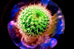Microscope cactus