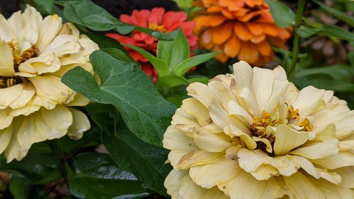 Garden flowers - Entheogen