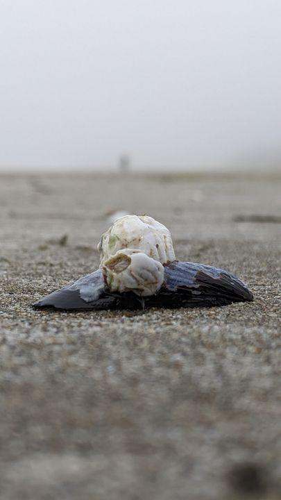 Beach Mollusk Symbiosis - Entheogen