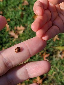 Ladybug fingers