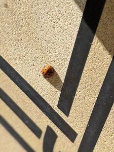 Ladybug Lines
