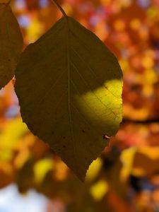 Last Leaf of Green