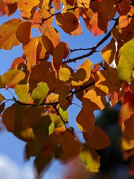 Autumnals - Entheogen