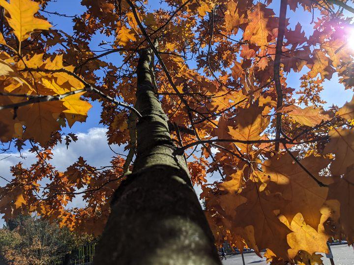 Autumn Branches - Entheogen