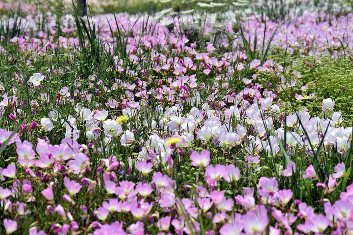 Wild and Pink - Rachael Beauchamp