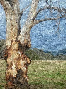 Knarls on a tree