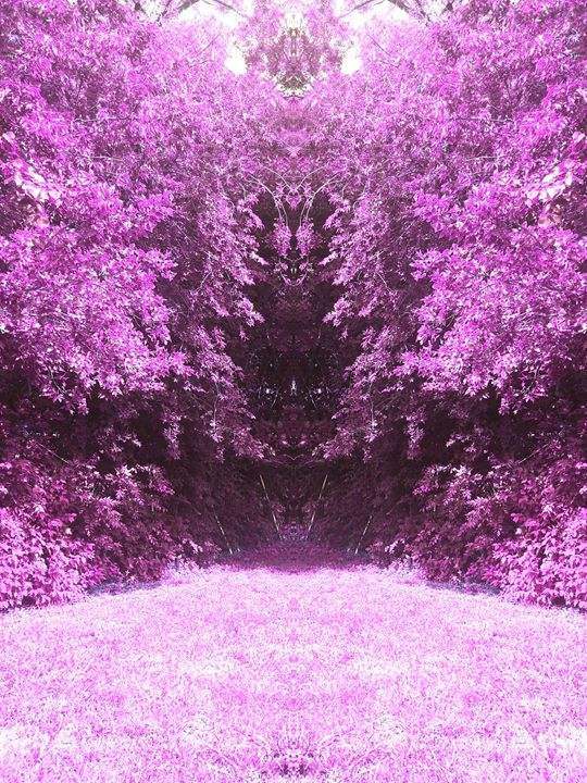 The Purple Jungle - JC