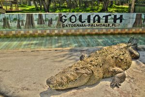 Giant Crocodile