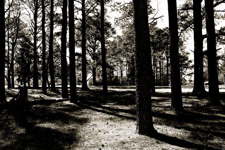 among the pine - Samantha Marlo