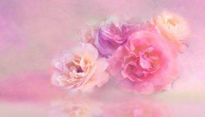 Flower Floral Nature Petal Roses