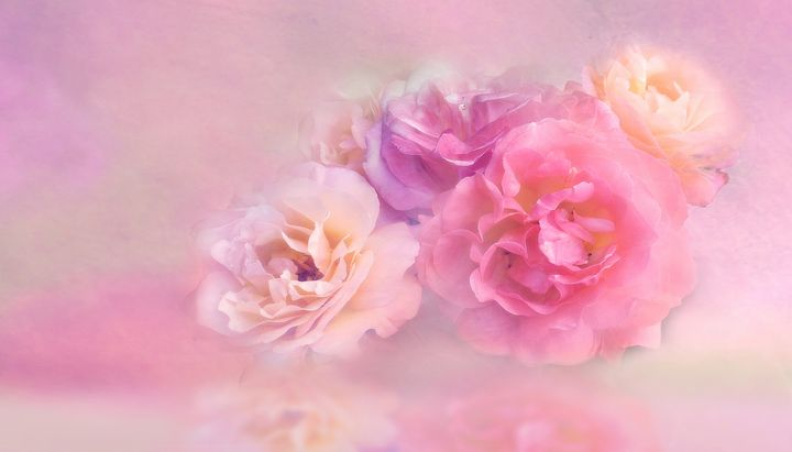 Flower Floral Nature Petal Roses - hgmielke