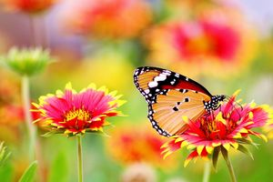 Tropical flowers and butterflies