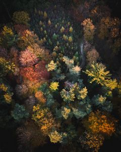 Aerial view Orange Gray Forest