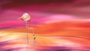 Flamingo Bird Blur Blurred Pink