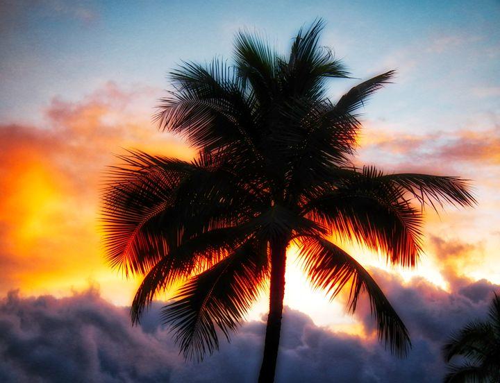 Palm Tree Silhouette - MAE Art Gallery