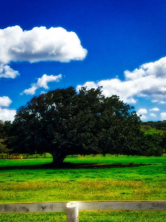 Lone Tree - MAE Art Gallery