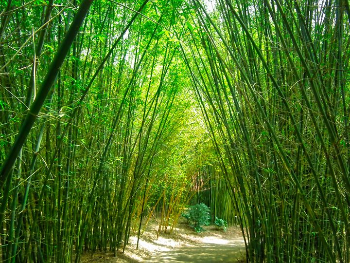 Bamboo Forest - MAE Art Gallery