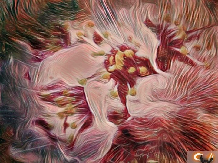 Redbloom - CharlieNashville's PhotoArt