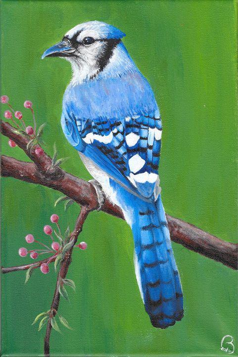 Blue Jay - Beatrice