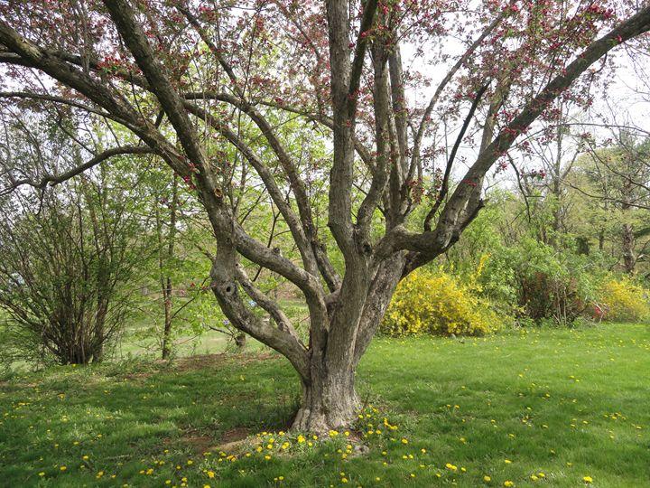 Tree - AJ Worley