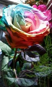Tie dyed rose for my lady