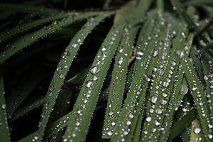 Raindrop Residue