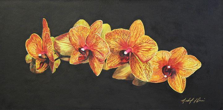 Sogo Orchid - Michael A. Davis