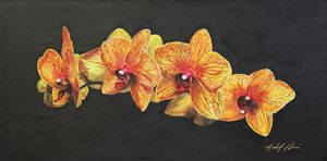 Sogo Orchid