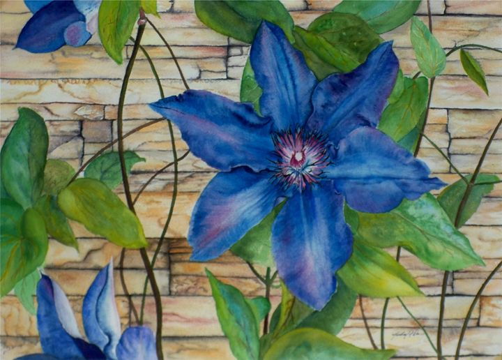 Blue Clematis - Michael A. Davis