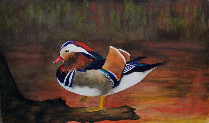 Mandarin Duck #1 - Michael A. Davis