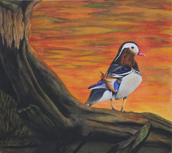 Mandarin Duck #2 - Michael A. Davis