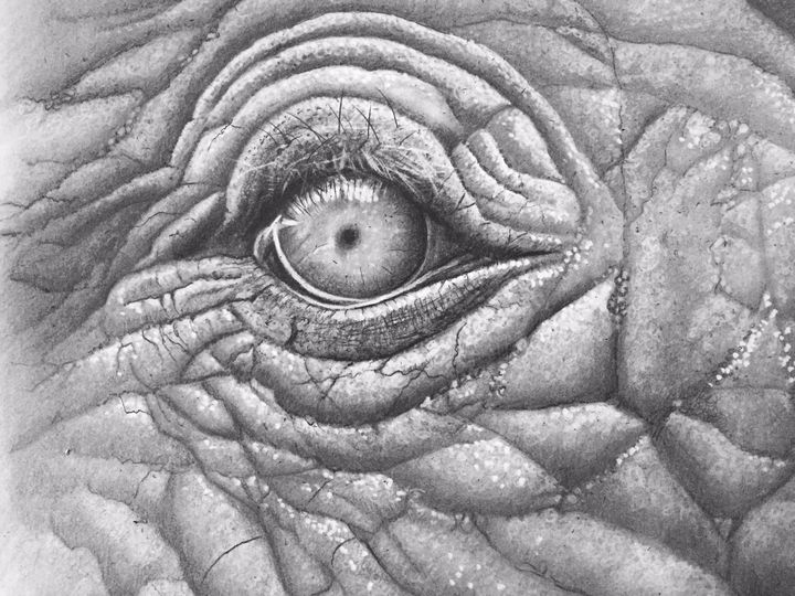 The eye - Rubecon