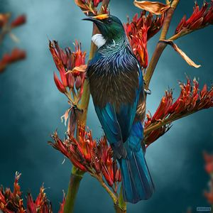 Tui Tea Time - Julian Hindson