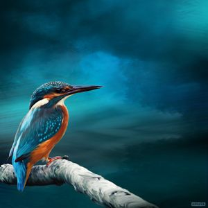 Kingfisher on Watch