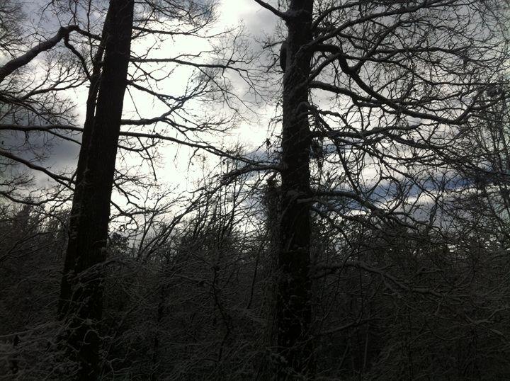Winter Forest - Daniel Poor