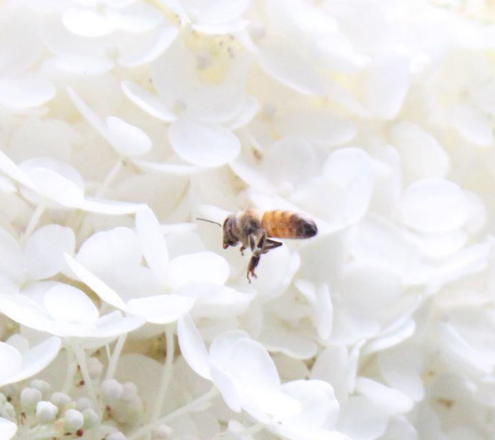 Bee - The Artful Codger