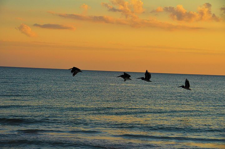 Pelicans of the Gulf - Scenic America Photography