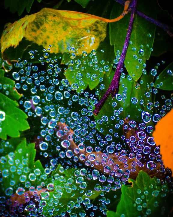 Drops In a Web - Andrew Willett Photography and Art