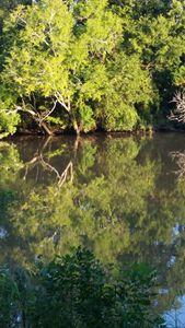 Vermilion River Reflections