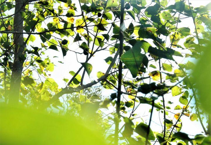 Greenery - Vivian L.