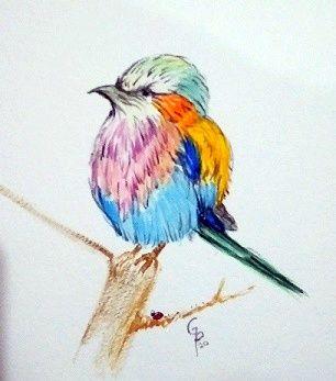 watercolor of rainbow bird 2 - GParker Artworks