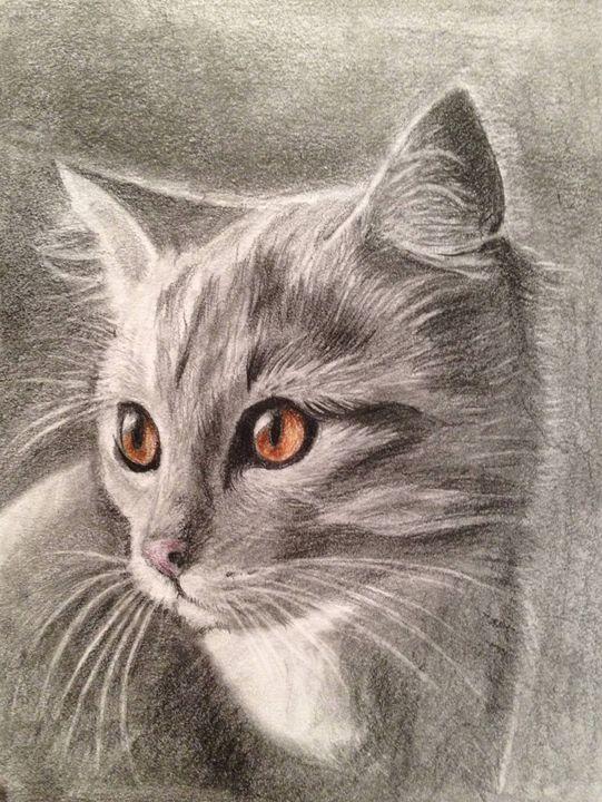 Amber eyes cat - Eva-Lotta Kastilan-Ezer