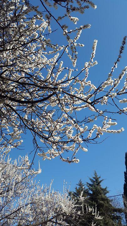 blossoming trees - nanakavelashvili