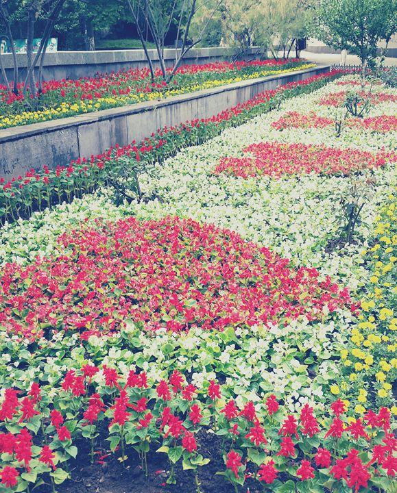 flowers - nanakavelashvili